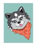 Husky dog. Cartoon husky dog. Husky dog portrait. Husky dog icon. Isolated Husky dog. Husky dog on blue. Royalty Free Stock Images