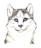 Husky,  dog head avatar. Husky dog head avatar Stock Image