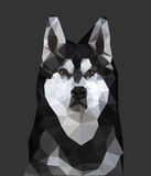 Husky Dog Low Poly Fotos de archivo libres de regalías