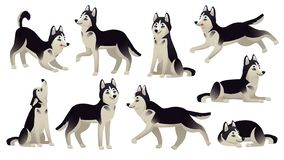 Husky dog poses. Cartoon running, sitting and jumping dogs. Active huskies animal characters isolated vector set stock illustration