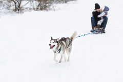 Husky dog are pulling the sledge with full speed. Mother and little girl ride dogsled. Stock Photography
