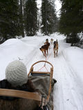 Husky dog sled. Husky dog team pulling a sled in the snow in Lapland Royalty Free Stock Photos