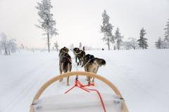 Husky dog sledding in Lapland Finland. Husky dog sledding in Lapland, Finland stock image