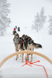 Husky dog sledding in Lapland Finland Royalty Free Stock Photos