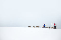 Husky dog sledding in Lapland Finland Stock Photos