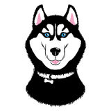 Husky Dog. Vector Husky. Dogs of traditional head coloring with a collar. Isolated illustration on white background Royalty Free Stock Image
