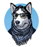 Husky. Dog wearing spectacles and scarf. Ð¡olor graphic illustration.  royalty free illustration
