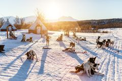 Husky dogs. Husky kennel visit in Northern Norway royalty free stock image