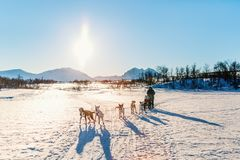 Husky safari. Husky dogs are pulling sledge with family of father and daughter on sunny winter day in Northern Norway Stock Photo