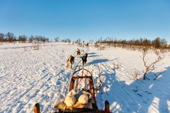Husky safari. Husky dogs are pulling sledge with family on sunny winter day in Northern Norway Stock Photos