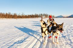 Husky safari. Husky dogs are pulling sledge with family on sunny winter day in Northern Norway Stock Image