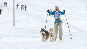 Husky dogs and woman athlete during skijoring competitions. NOVOSIBIRSK, RUSSIAN FEDERATION - FEBRUARY 21: Skijoring competitions. Woman with two dogs skijoring stock video footage