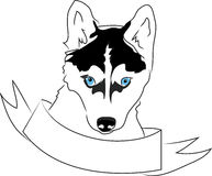Husky Head Royalty Free Stock Images