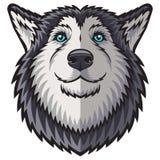 Husky Royalty Free Stock Photo