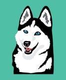 Husky icon. Friendly blue-eyed husky on blue background Stock Images