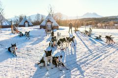 Husky dogs. Husky kennel visit in Northern Norway Stock Photography