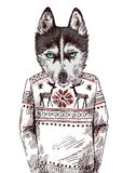 Husky in knitted sweater. Vector illustration for greeting card, poster, or print on clothes. Fashion Style drawing. Hipster Stock Photo