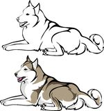 Husky lying. Vector illustration - lying Siberian Husky Stock Image