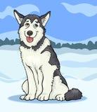 Husky or malamute dog cartoon illustration Royalty Free Stock Image