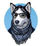 husky Occhiali e sciarpa d'uso del cane Illustrazione del grafico di olor del ¡ di Ð Immagine Stock Libera da Diritti