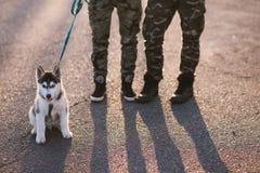 Husky. People and husky dog playing Stock Photography