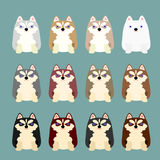 Husky puppies coloring variations Royalty Free Stock Image