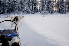 Husky ride. Huskies pulling a sledge on the snowy field Royalty Free Stock Image