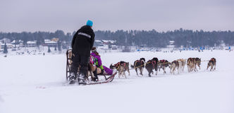 Husky ride over the frozen sea. Enjoying the race with husky dogs Royalty Free Stock Images