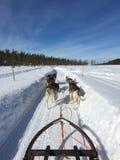 Husky Safari in Finnish Lapland, Kittila royalty free stock photography