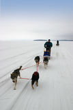 Husky safari on frozen lake Royalty Free Stock Images