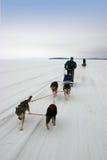Husky safari on frozen lake Royalty Free Stock Images