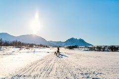 Husky safari. Husky dogs are pulling sledge with family of father and daughter on sunny winter day in Northern Norway Stock Image
