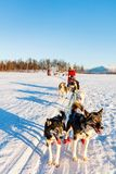 Husky safari. Husky dogs are pulling sledge with family on sunny winter day in Northern Norway royalty free stock photo