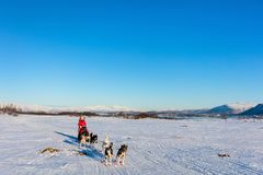 Husky safari. Husky dogs are pulling sledge with family on sunny winter day in Northern Norway stock photo