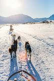 Husky safari. Sledding with husky dogs in Northern Norway royalty free stock image