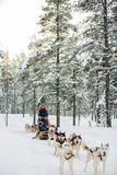 Husky safari on Winter day. Husky dogs are pulling sledge with family at winter forest in Lapland Finland stock images