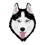 husky siberian för hund stock illustrationer