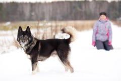 Husky siberiano della razza del cane Fotografia Stock Libera da Diritti