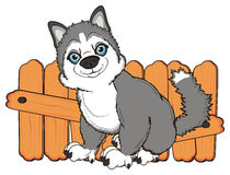 Husky sit near the boards Royalty Free Stock Images