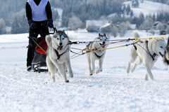 Husky sled dogs. Group of sled dogs running through lonely winter landscape royalty free stock photography