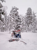 Husky sled in northern Finland Lapland Stock Photo