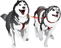 Husky sled race in the sport for speed. Vector running sled dogs Husky Stock Image