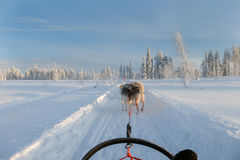 Husky sledge at Finland Stock Photography