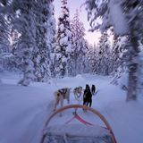 Husky sledge ride at twilight in winter wonderland. In Finnish Lapland, motion blur and first person view from the sledge