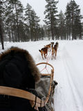 Husky sleigh winter fun Stock Photo