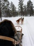 Husky sleigh winter fun stock photo