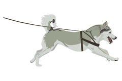 Husky Vector Illustration Photographie stock libre de droits