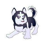 Husky vector illustration, isolated on white background. Stock Image