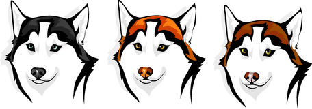 Husky - wolf. Vector head of a dog breed Siberian Husky Stock Image