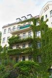 husmurgröna Arkivbild